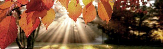 Al weer half oktober. De dagen vliegen voorbij